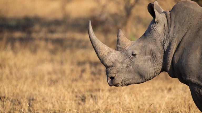 Toddler seriously injured after falling into rhino enclosure at a Florida zoo