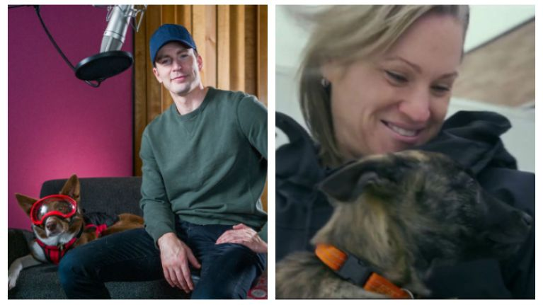 WATCH: Chris Evans narrates this powerful documentary about dogs trained to save people's lives