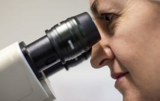 """Israeli research team claim they """"will offer a complete cure for cancer"""" in less than a year"""