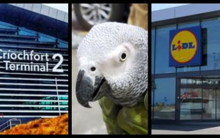 This story about Dublin Airport, a Lidl store, and an African parrot has put us in a great mood
