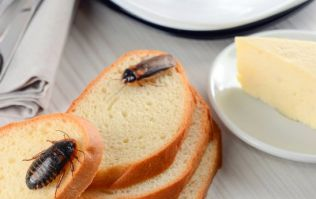 Dead rodents, cockroach infestations and poor staff hygiene amongst reasons for food closure orders in Ireland last month