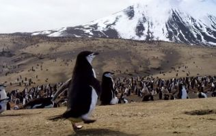 WATCH: The trailer for David Attenborough's latest documentary series looks excellent