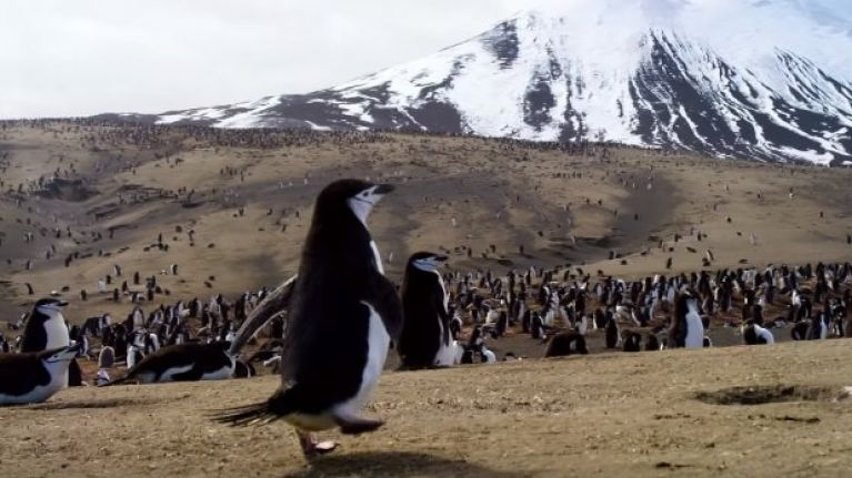 WATCH: BBC's new nature documentaries look truly epic