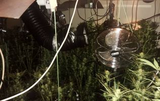 Gardaí discover large cannabis growhouse in Carlow