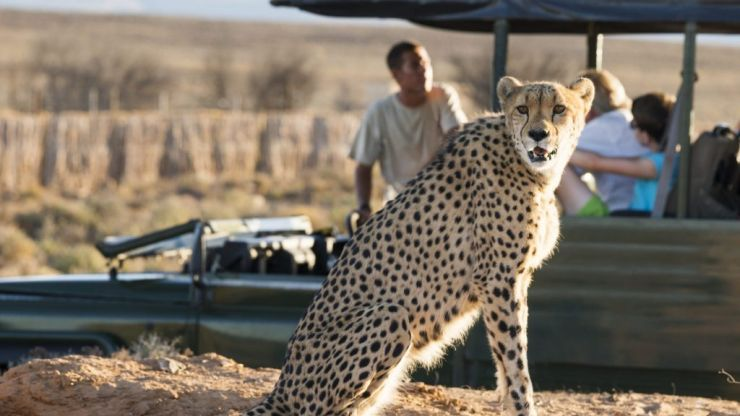 Our ultimate South Africa safari bucket list for wildlife lovers