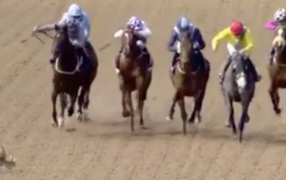 Two horny rabbits got onto the race track in Dundalk and started riding