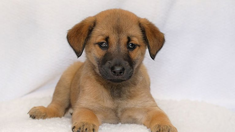 best cheap 27ca7 014ae ISPCA appeal for homes for three abandoned puppies found in ...
