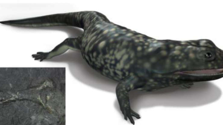 325-million-year-old amphibian fossil found in Clare