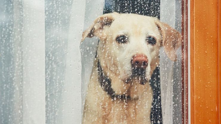 'Lullabies for Lorenzo': A Spotify playlist to keep your dogs calm during the storm