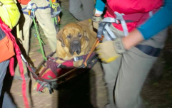 Big dog named Floyd rescued on stretcher after getting tired during hike