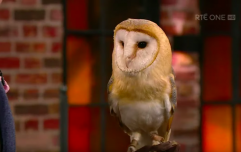 So, the Late Late Show Owl has been named Gabriel, following a public vote