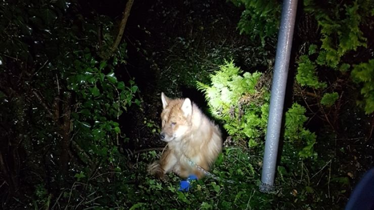 ISPCA appeals for information on severely injured dog found chained to gate near National Animal Centre