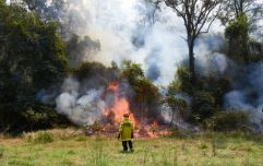 Australian firefighter accused of deliberately starting bushfires