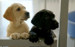 WATCH: New TG4 documentary to focus on special relationship between people and dogs