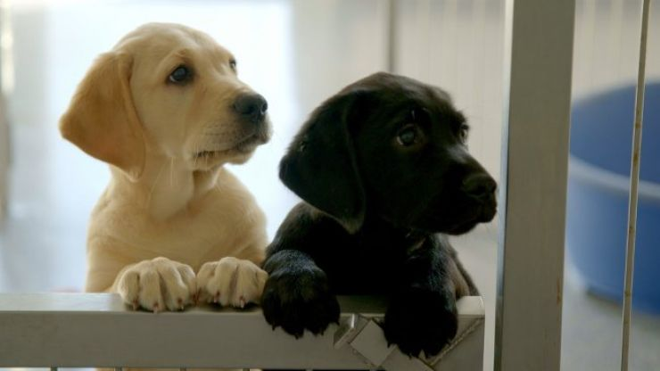 """""""Huge spike"""" in people giving up dogs as lockdown restrictions ease, says Dogs Trust"""