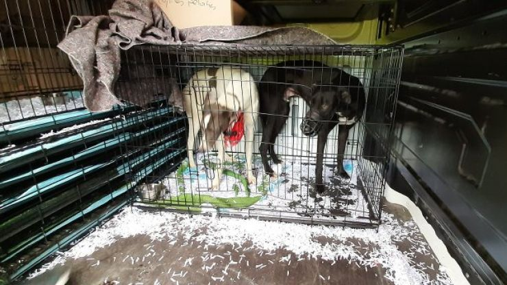 DSPCA calls on government to withdraw funding to greyhound industry