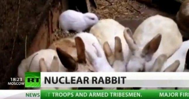 Video: Nuclear rabbit birth sparks mutant baby concern