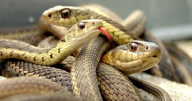 So how did a snake make its way to the Guinness Storehouse?