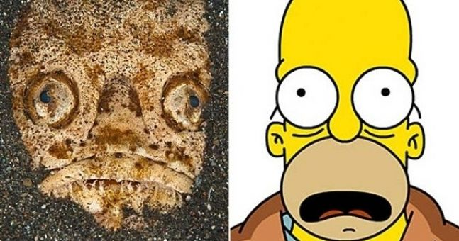 Does this fish look like Homer Simpson?