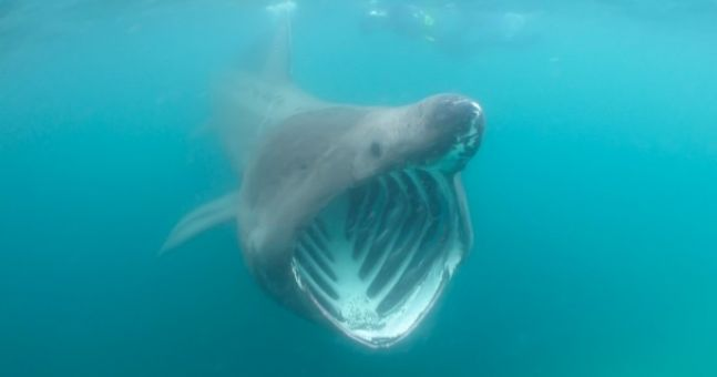 Video: Good thing this wasn't a Great White...