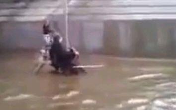 Video: Hero dog pushes wheelchair-bound owner through flooded street