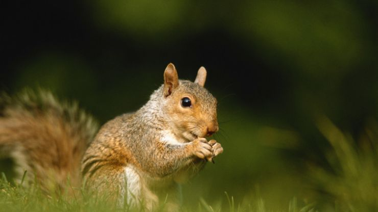 Pic: Cops are using a squirrel to track down €138,000 worth of stolen nuts
