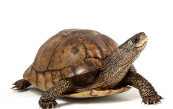 What the shell? Passenger stopped from boarding after dressing his turtle up as a burger
