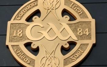 Have you seen Fionn the Irish terrier, the new GAA mascot?
