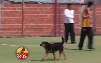 Didier Dog-ba: Pooch nods home to score a great goal