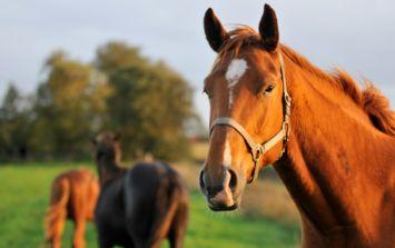 PIC: A man was seen riding his horse through a Tesco in Ballinasloe this evening