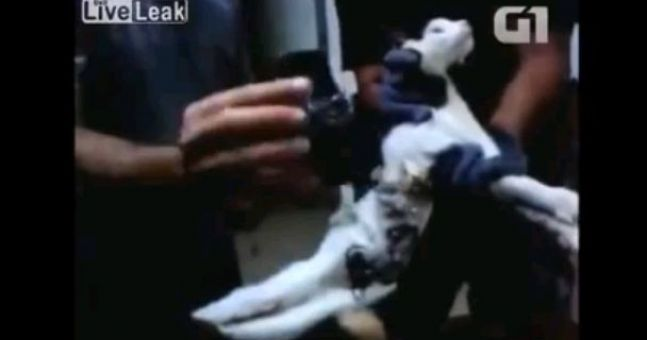 Video: A cat caught trying to smuggle a phone and tools into Brazilian prison