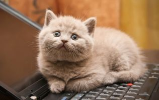 Taking the (cat) p*ss. Dell owners complain about laptops smelling of cat urine