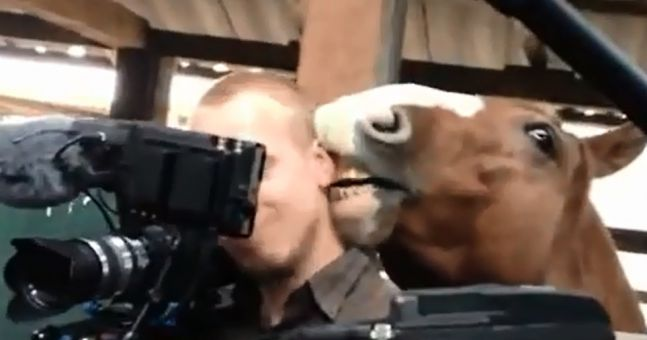 Video: Cameraman remains remarkably calm while amorous horse nibbles on his ear