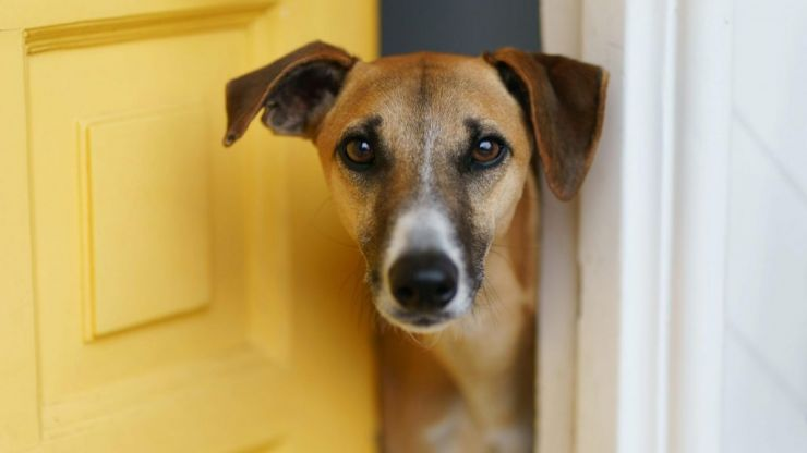 """Dogs Trust Ireland warn dogs could face """"heartbreak"""" and """"separation anxiety"""" when lockdown ends"""