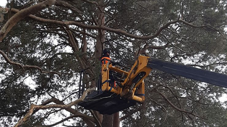 ISPCA, fire services and tree services rescue cat that was stuck in a tree for six days