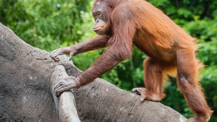 Dublin Zoo to reopen from 2 June