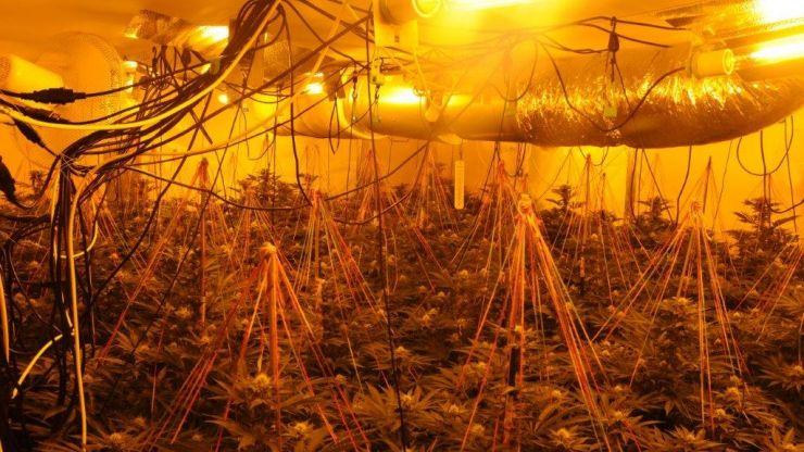 €240,000 worth of cannabis seized in Leitrim