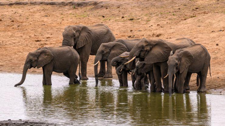 """Wildlife in """"catastrophic decline"""" due to human destruction, scientists warn"""