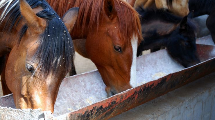 GAIN investigating presence of banned substance in its horse feed
