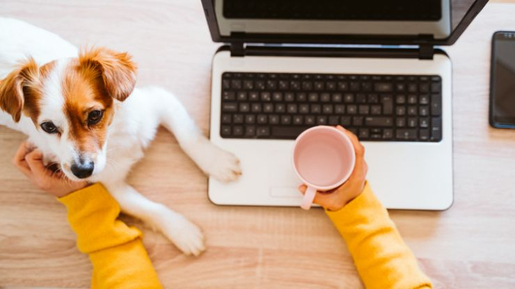 Public warned that pets may experience anxiety when owners return to work