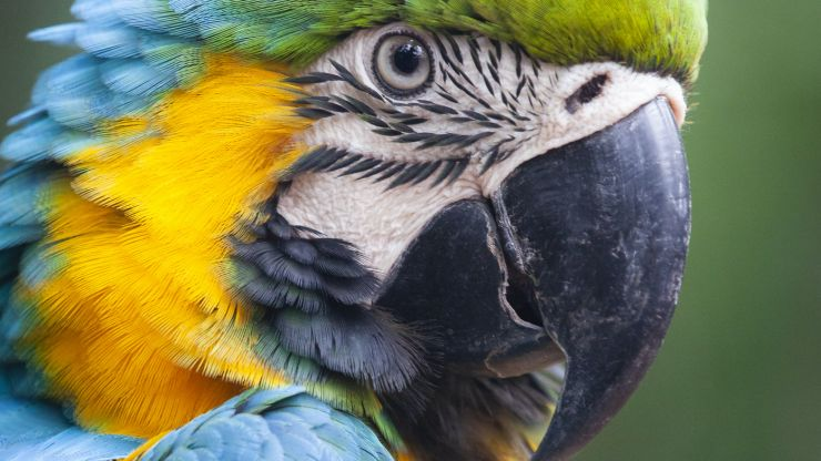 Pet parrot 'Eric' saves man from house fire in Brisbane