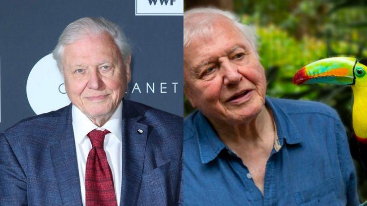 Brand new David Attenborough nature doc drops on Netflix today