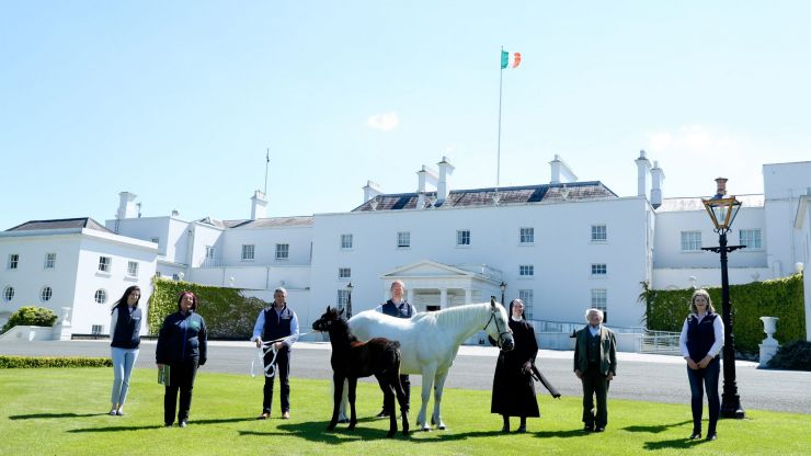 President Higgins welcomes two ponies to live at Áras an Uachtaráin
