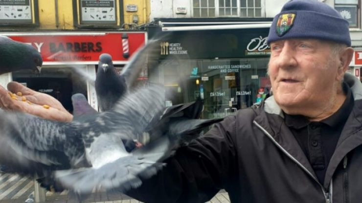 Famed 'birdman' of Corktold to fly away due to pigeon-related mayhem