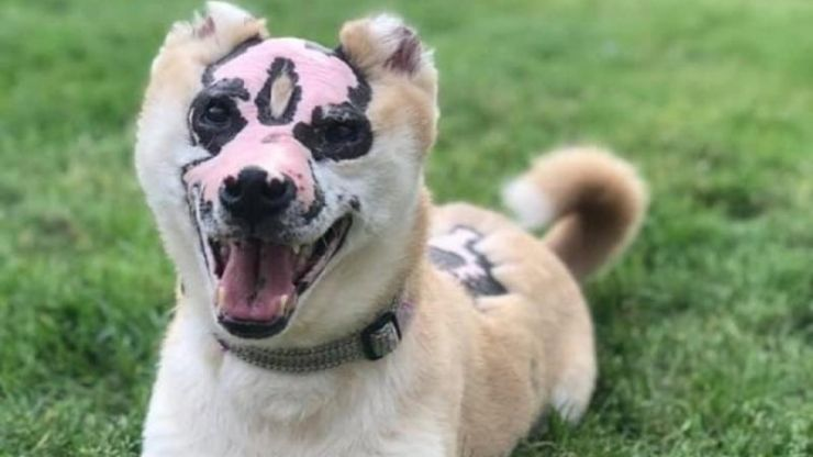 Dog badly scarred in fire becomes therapy dog for burn victims