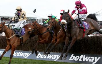 Punters offer well-wishes to No More Heroes who tore a tendon in the 2.10 at Cheltenham