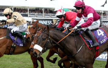 Racing world mourns as No More Heroes is put down following Cheltenham injury