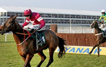 Staggering losses prove this has been the worst Cheltenham for bookmakers in a very, very long time
