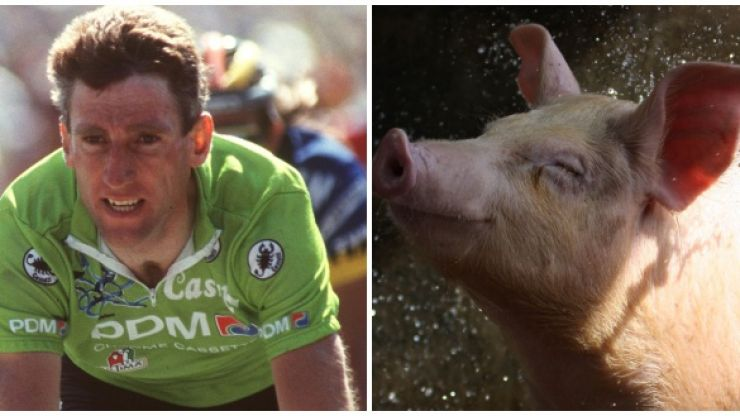 Ireland's greatest ever cyclist collides with a pig... it ends well for neither