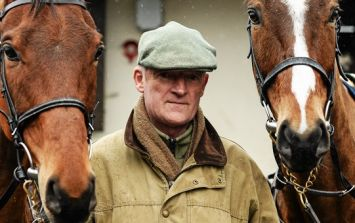 Stuck for work down around Carlow this winter? Willie Mullins has your back